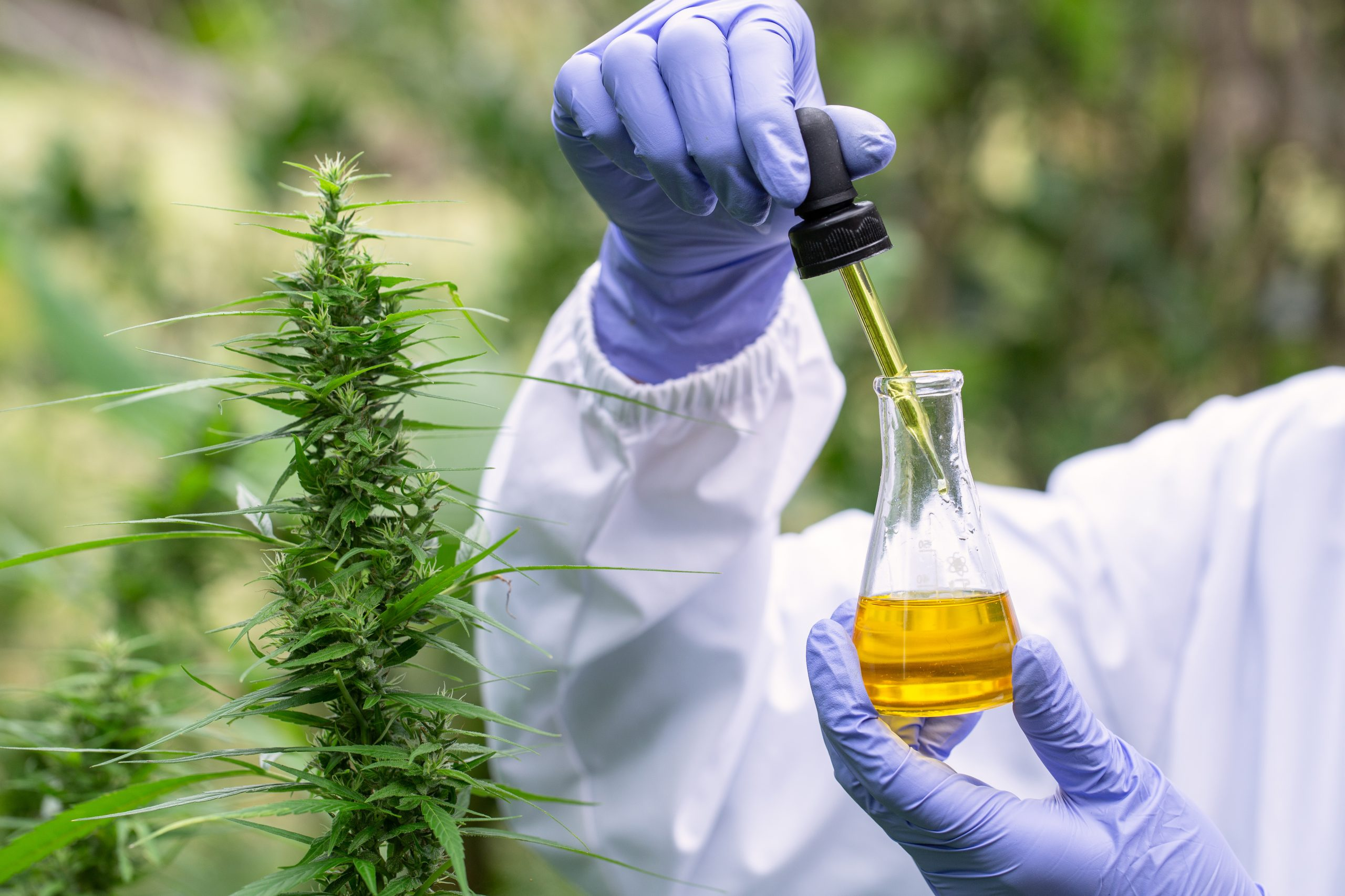 What CBD is Right for Me? How to Make the Best Choice