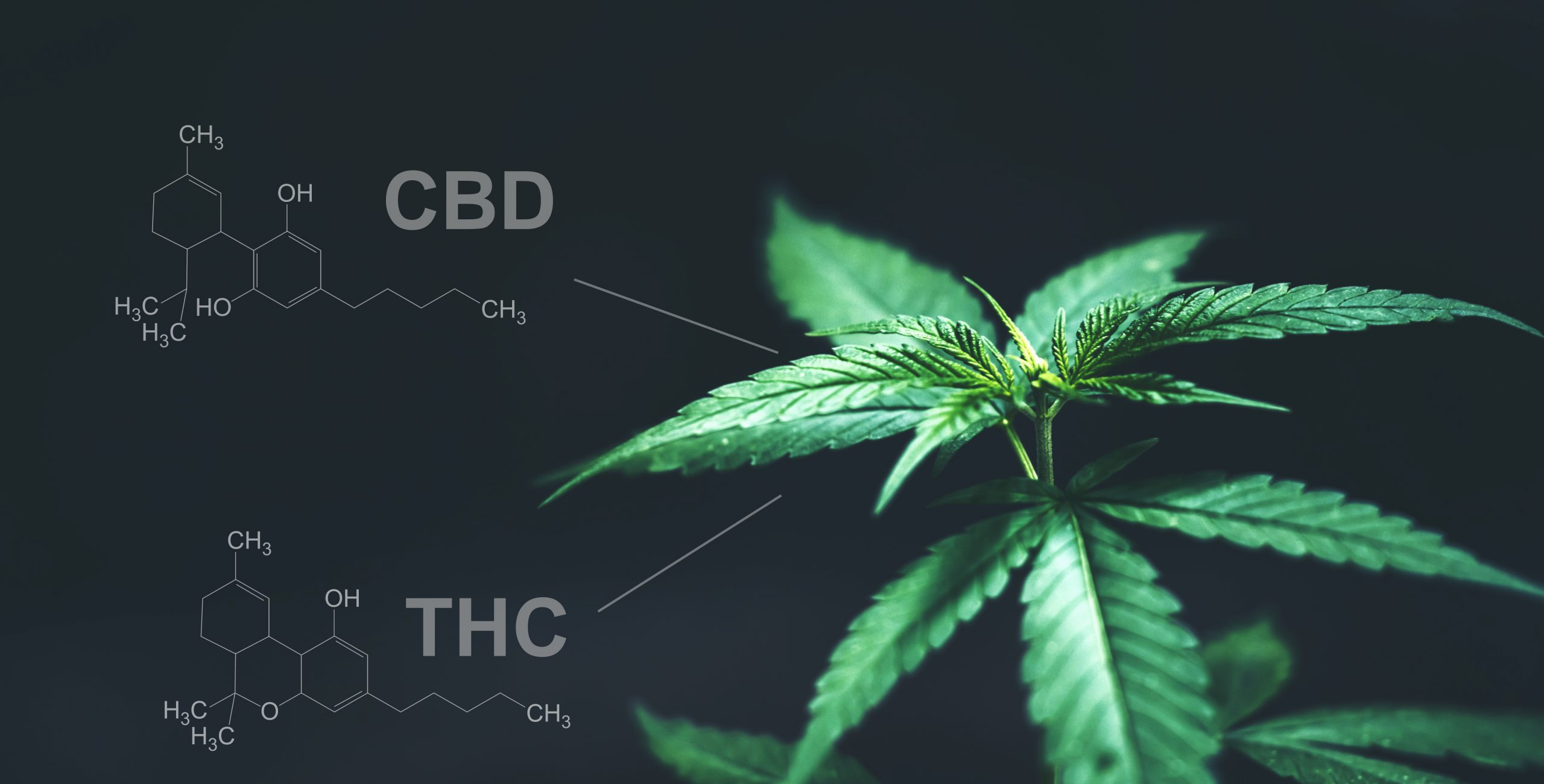 The Entourage Effect: Why THC and CBD Are Better Together